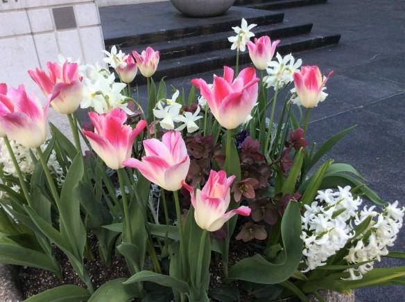 Tulipfour