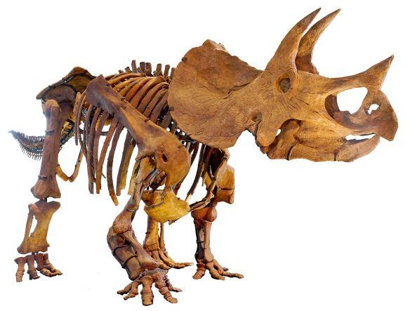 LA-Triceratops_mount-2 (1)
