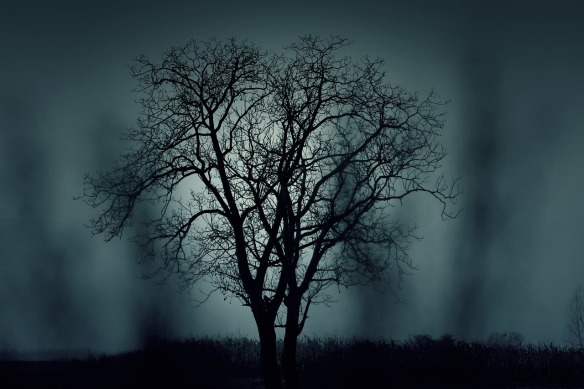 Tree mysterious