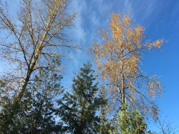 trees in sun