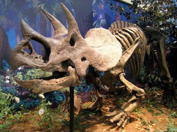 Triceratops_prorsus_-_IMG_0697