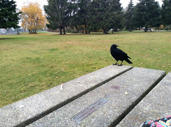 Crow at lunch