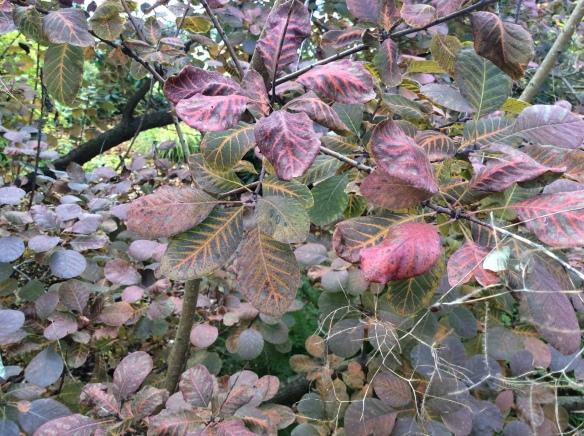 leafmonotones
