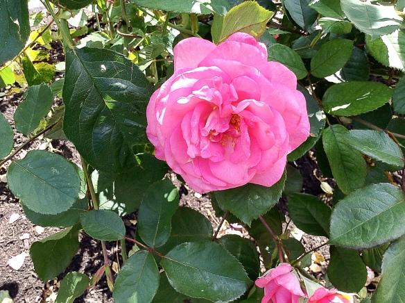 rosestanleypark